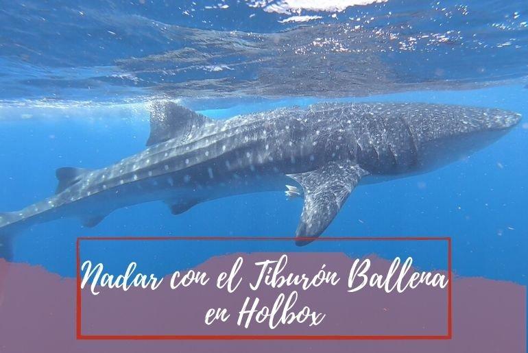 Tiburón ballena Holbox - Pasaporte a la Tierra