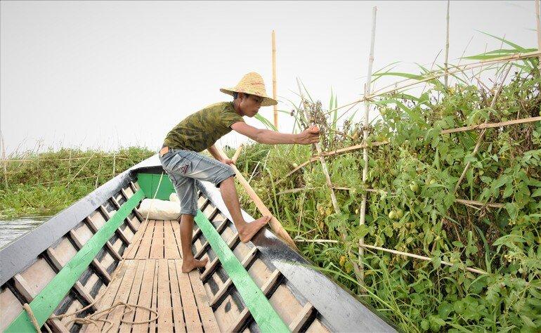 Jardines flotantes - Lago Inle, Myanmar