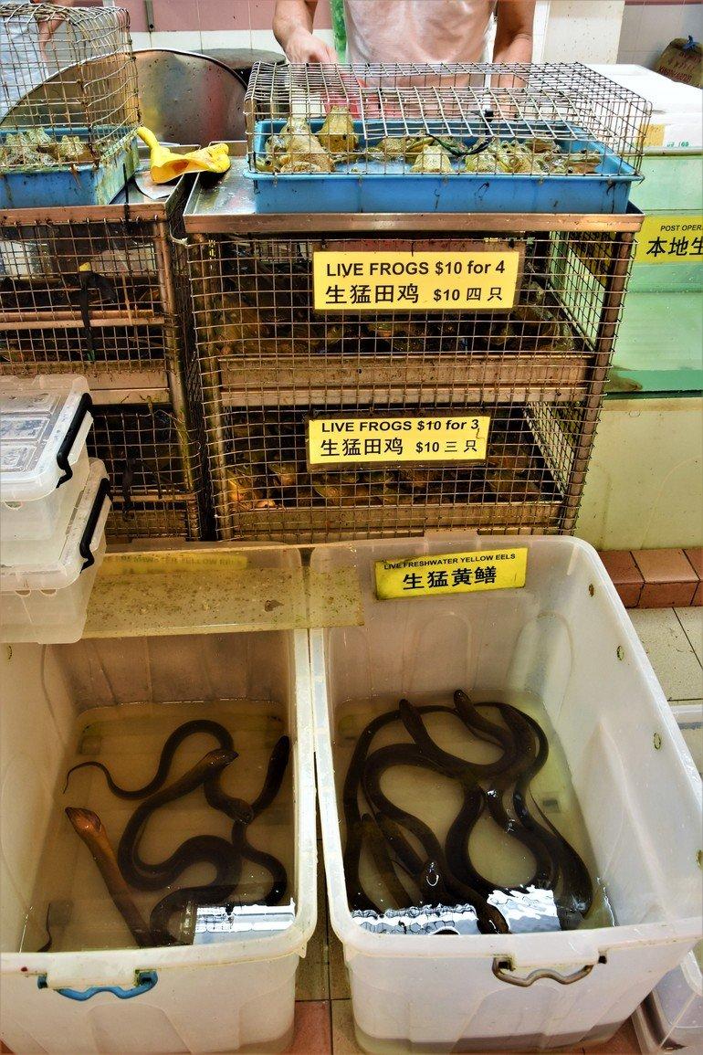ranas, anguilas