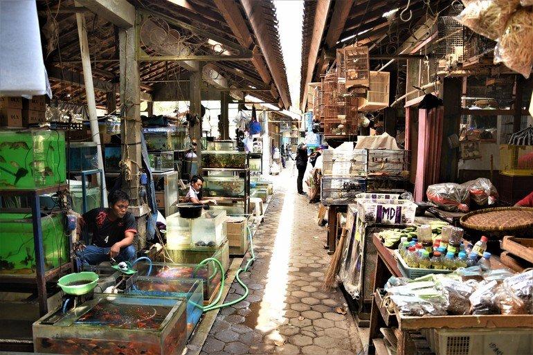Pasthy Love Bird Market Yogyakarta- Que ver en Yogyakarta