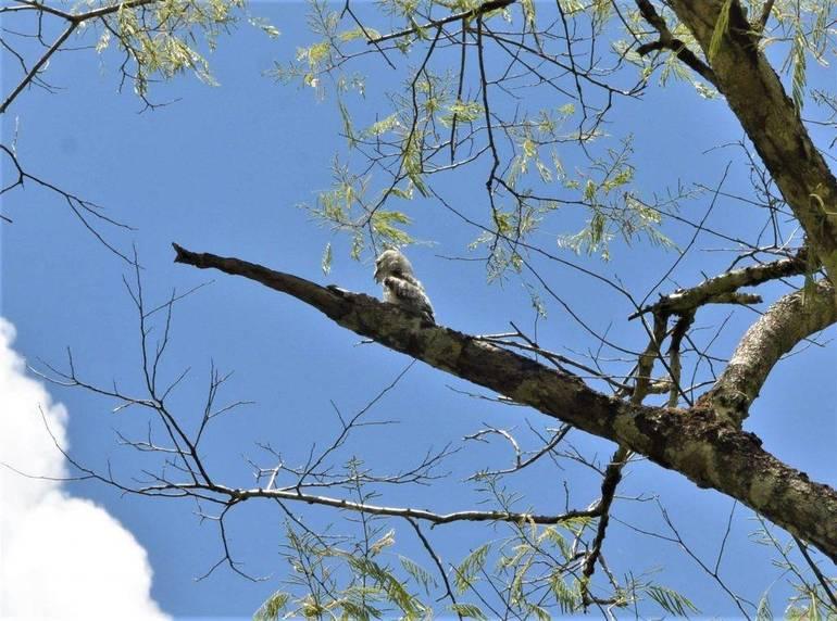 Pájaro palo