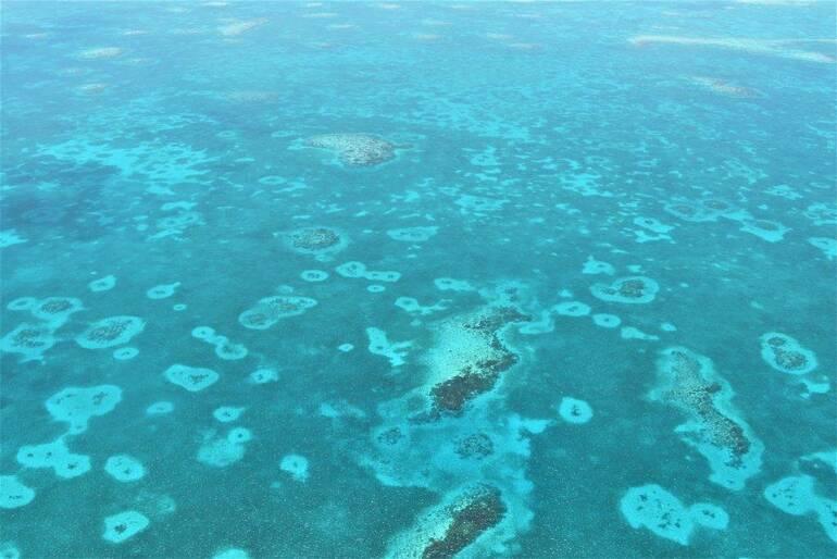 Barrera de coral beliceña