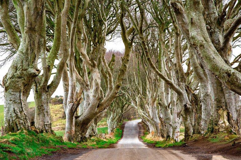 The Dark Hedges - La Calzada del Gigante Irlanda del Norte