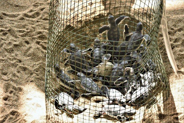 Centro de recuperación de tortugas en Sukamade