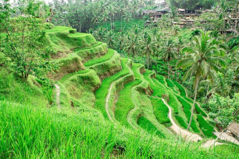 Arrozales de Tegalalang - Que hacer en Ubud