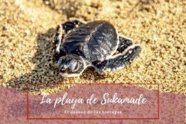 El desove de tortugas en Sukamade