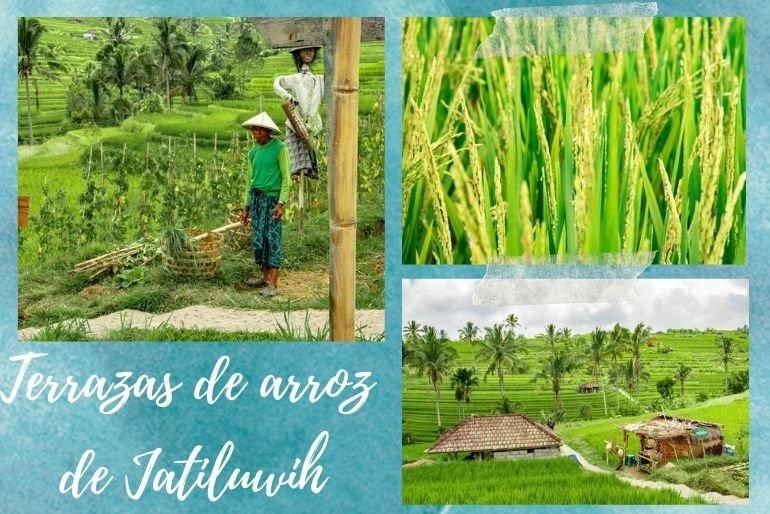 Terrazas de arroz de Jatiluwih - Que visitar en Bali