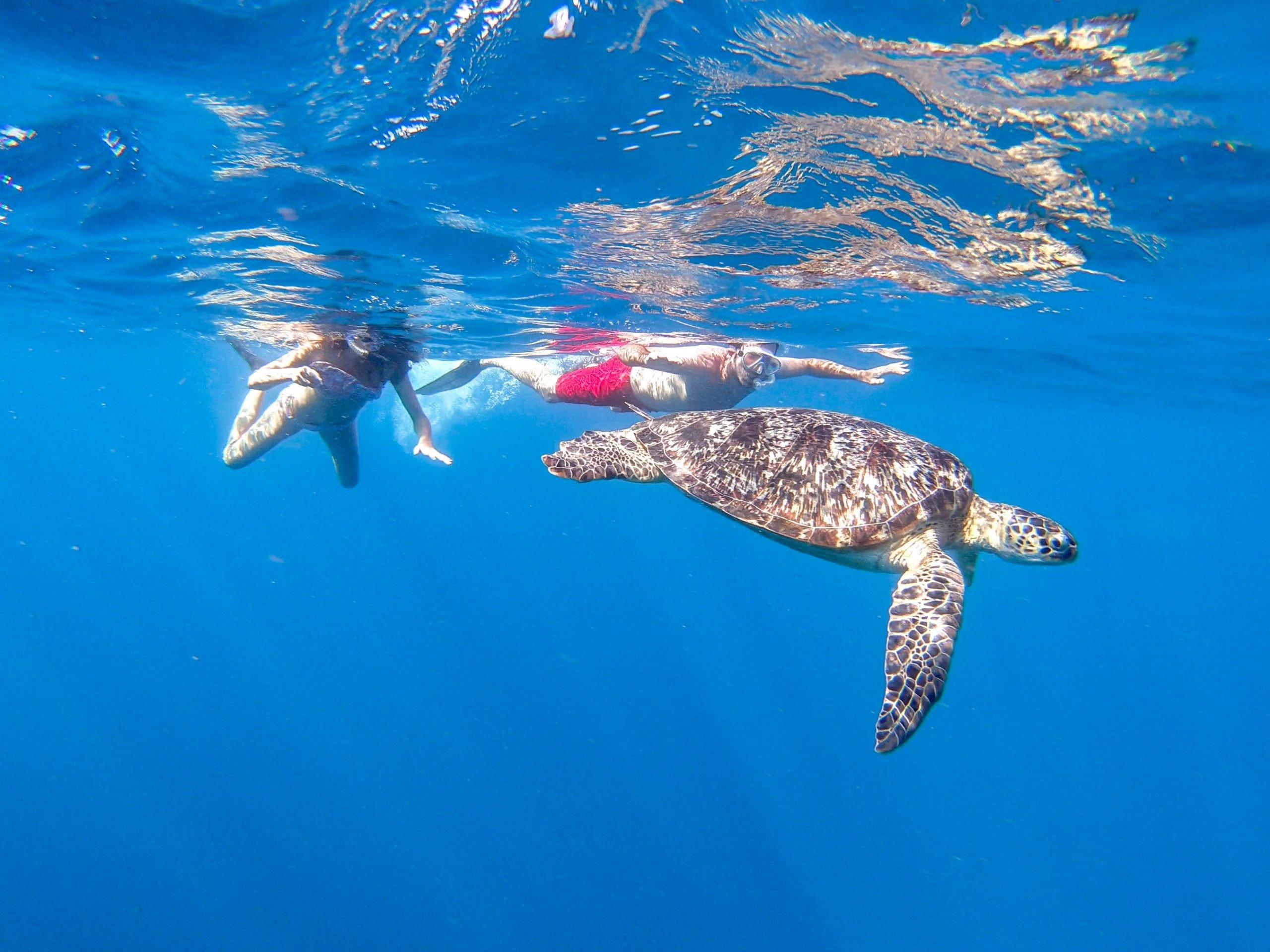 Punto para ver las tortugas en Islas Gili Indonesia
