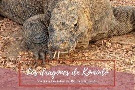 Dragones de Komodo - Pasaporte a la tierra