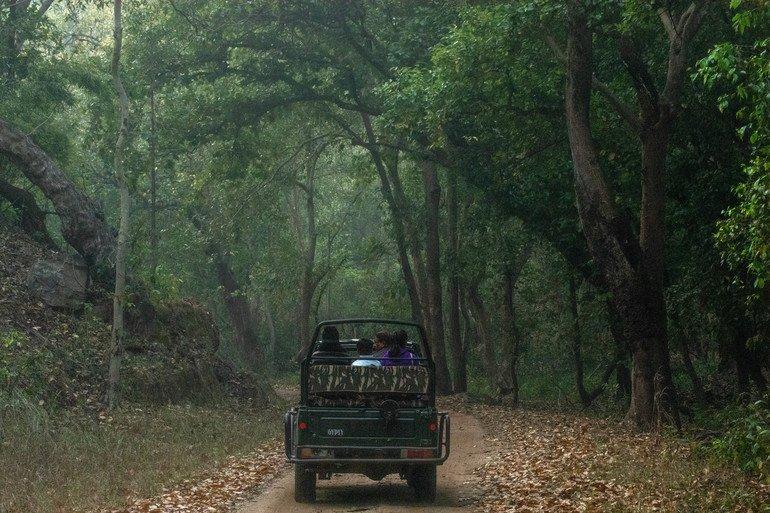 Reserva al Parque Nacional deBandhavgarh - India