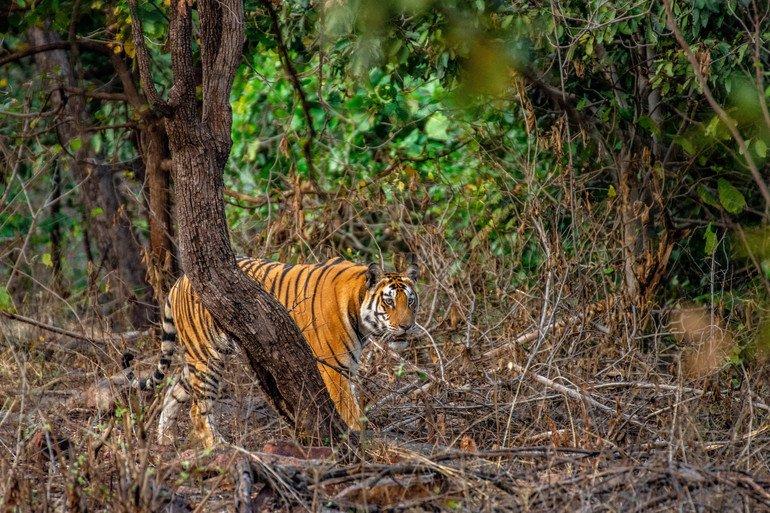 Parque Nacional de Panna - Safari en India