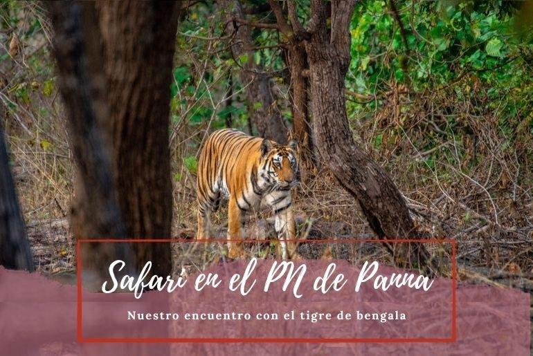 Safari en Panna India - Pasaporte a la Tierra