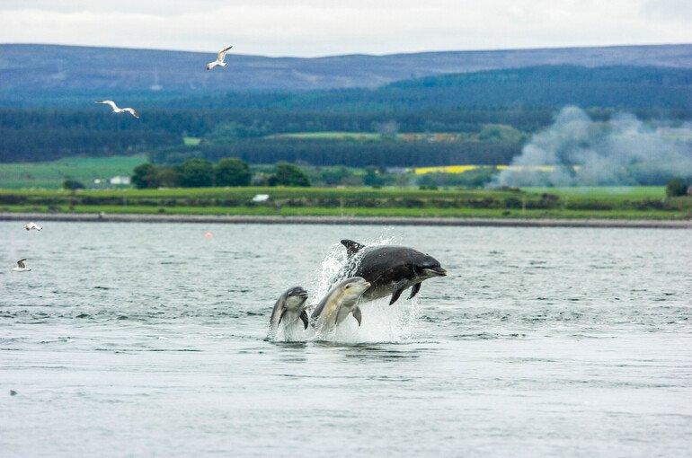 Chanonry Point - Que ver alrededores de Inverness