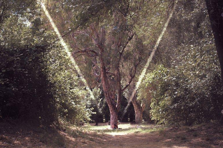 Sierra Norte Sevilla naturaleza Andalucía