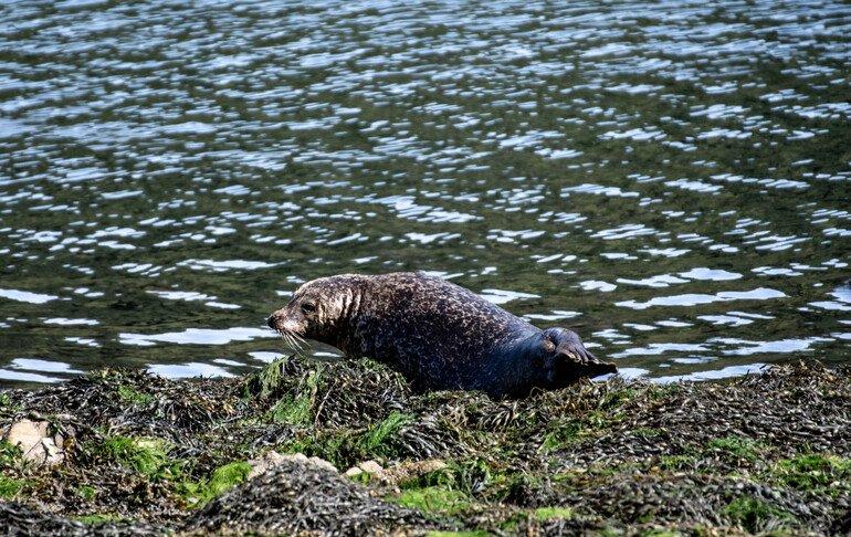 Kylerhea Isla de Skye en Escocia